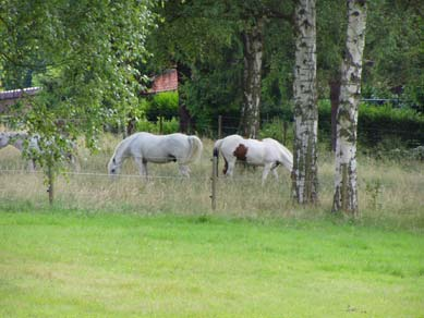 prairie-chevaux